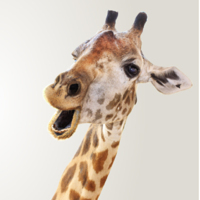 VR Giraffe Display